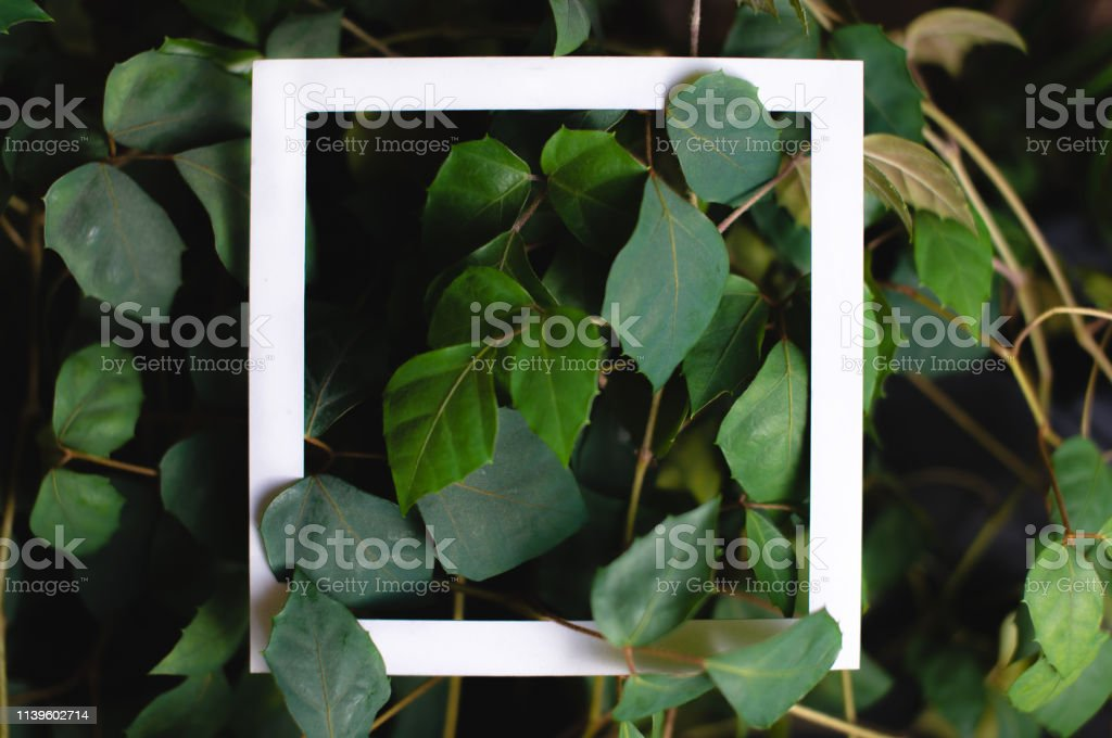 Square frame on the background of green leaves of tropical plants....