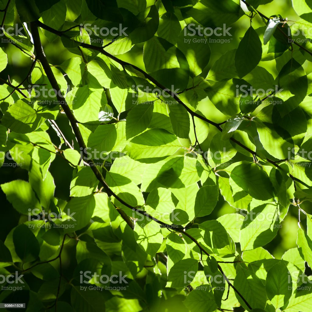 square green foliage background stock photo more pictures of