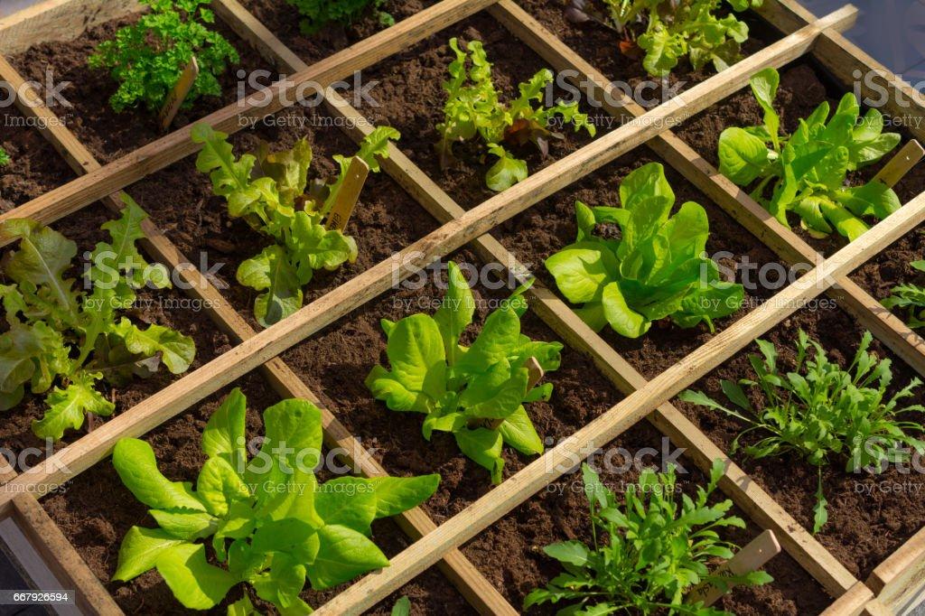 Square meter of urban vegetable garden stock photo
