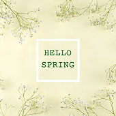 istock Square photo with gypsophila frame and the words hello spring. 1132729130