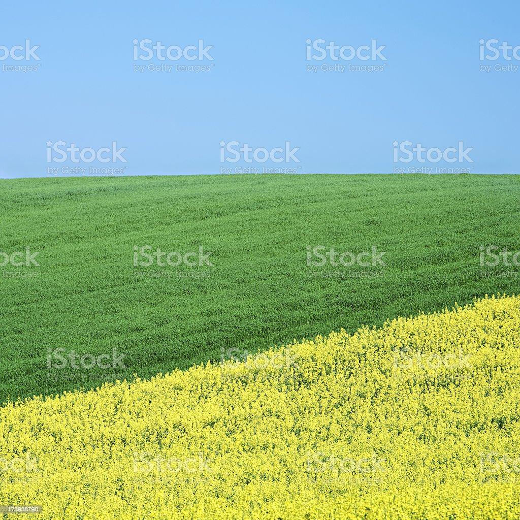 Square spring landscape 23MPix XXXL - meadow, blue sky royalty-free stock photo