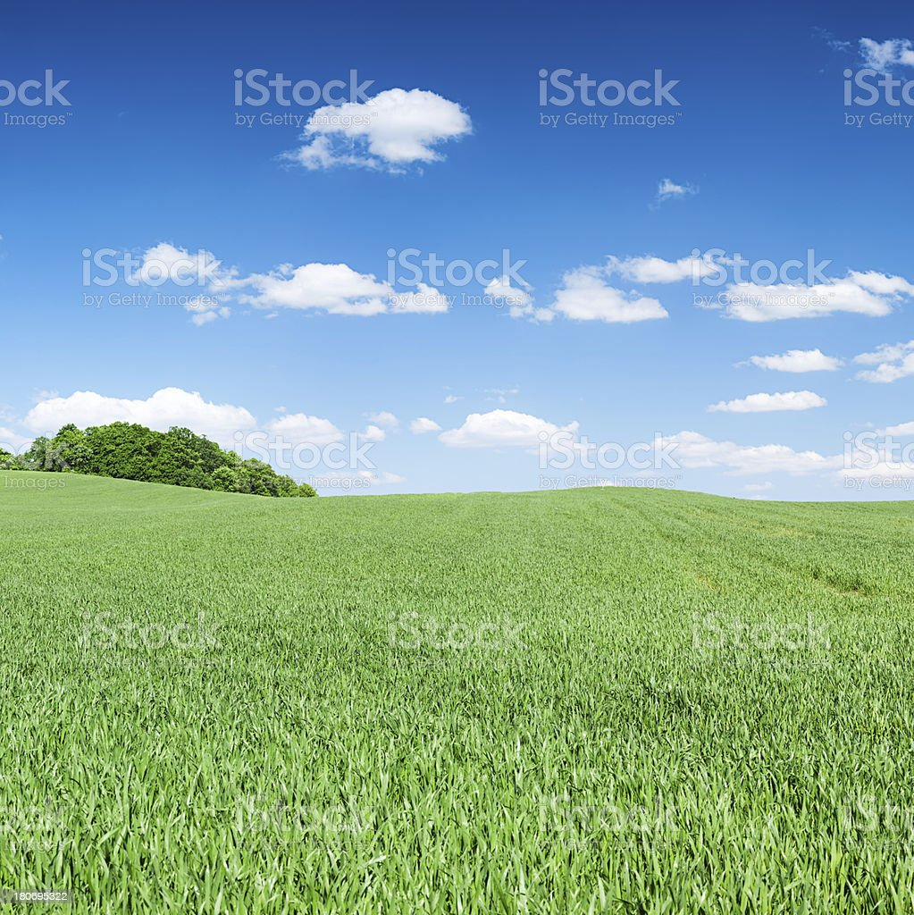 Square spring landscape 39MPix - meadow, blue sky royalty-free stock photo