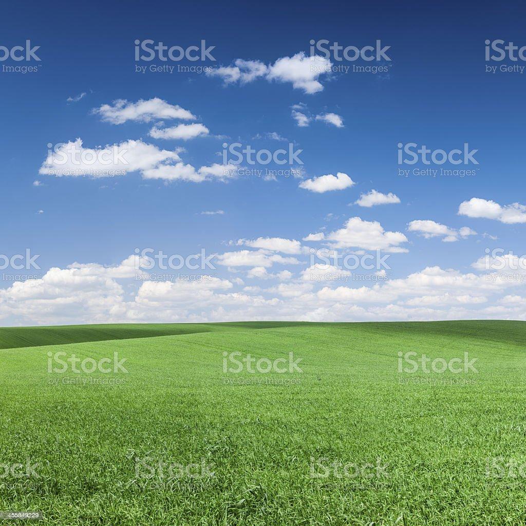 Square spring landscape 51MPix XXXXL - meadow, blue sky royalty-free stock photo