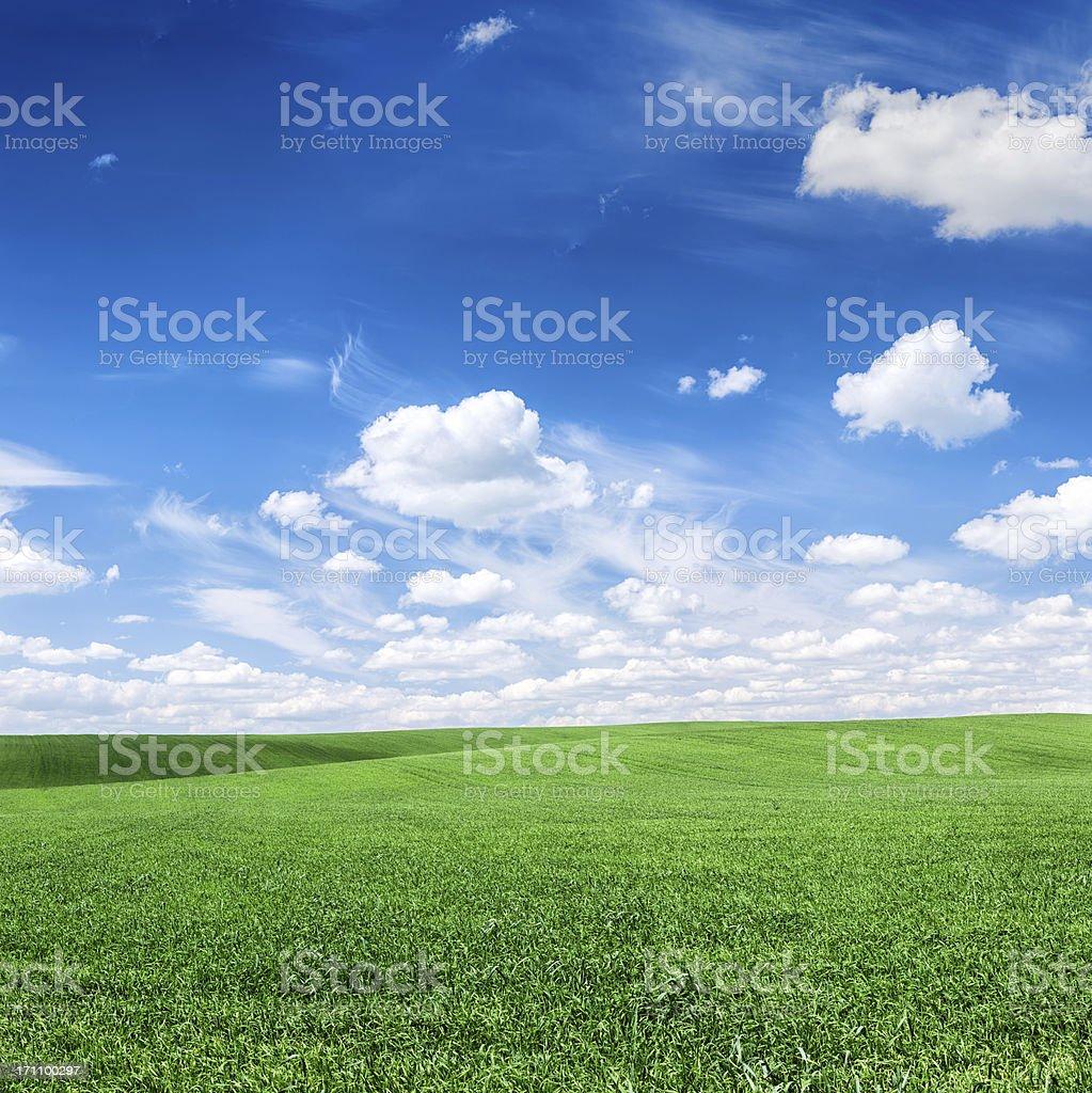 Square spring landscape XXXXL 38 MPix - meadow, blue sky royalty-free stock photo