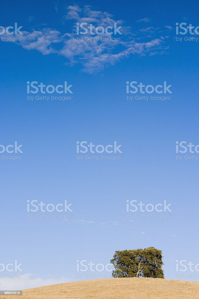 Square tree on the hill royalty-free stock photo
