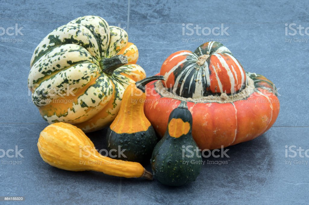 Squash and gourds on a dark background royalty-free stock photo