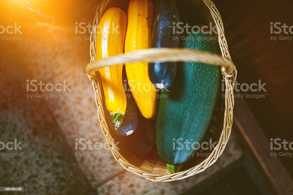 Squash and Zucchini in the basket stock photo