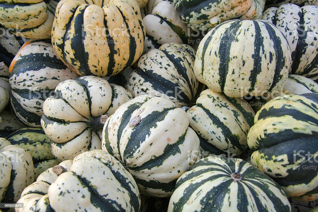 Squash Striped royalty-free stock photo