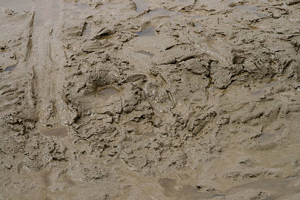 squelchy mud - mud stock photos and pictures
