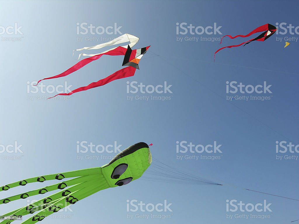 Squid in the Air royalty-free stock photo