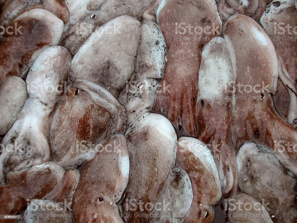 squids royalty-free stock photo