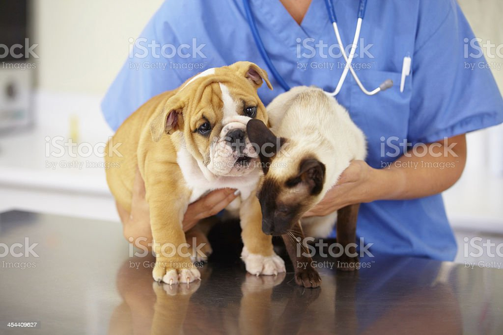 Squirming little patients stock photo