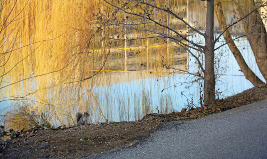 Squirrel by River, Spokane, Washington
