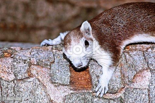 Squirrel climbing wall.