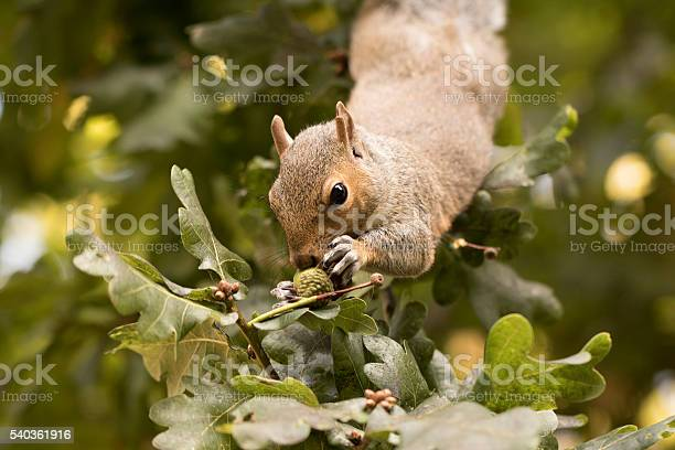 Photo of Squirrel gathering nuts