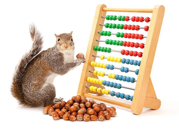 squirrel home economics - squirrel stock photos and pictures
