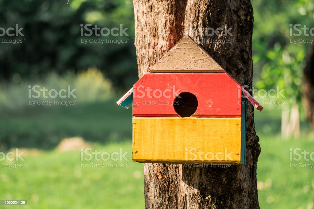 Squirrel home in park stock photo