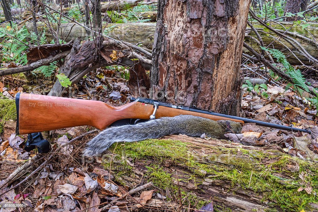 Squirrel Hunting stock photo