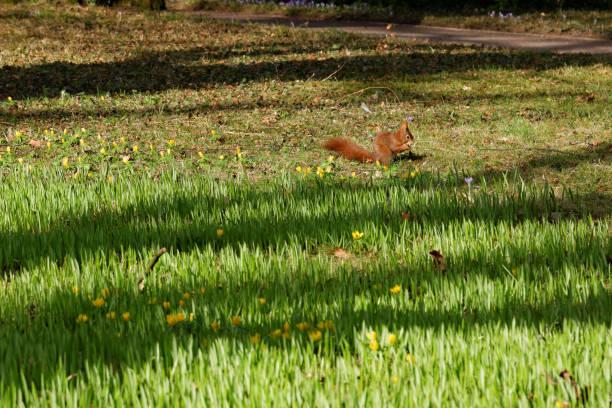 In einem lokalen Park Eichhörnchen – Foto