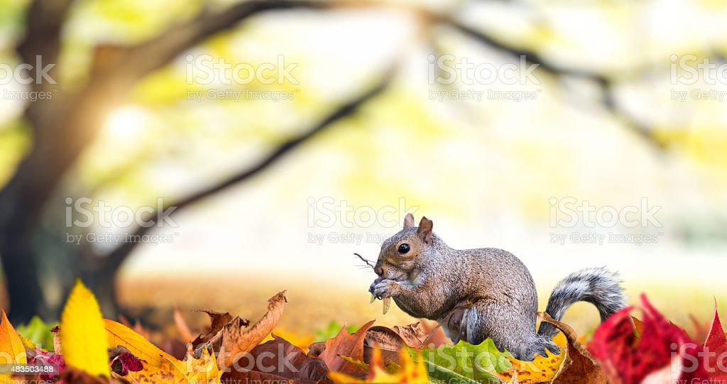 Squirrel In Autumn Park stock photo