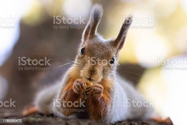 Photo of Squirrel in the autumn park.