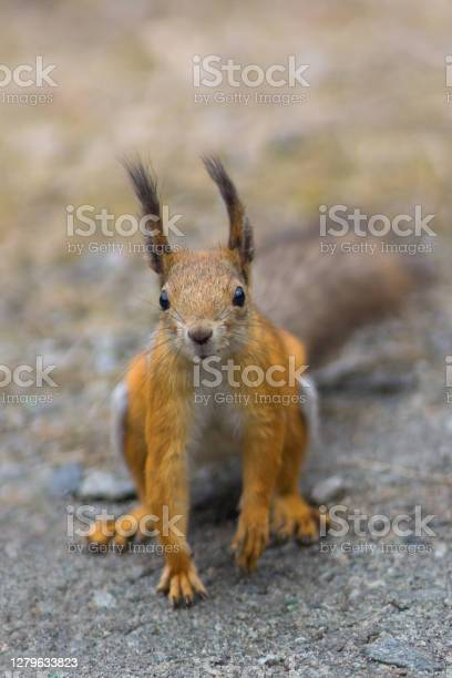 Photo of Squirrel in the forest. Soft focus on the squirrel.