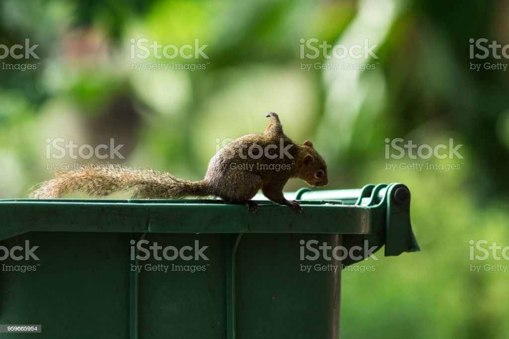 A squirrel in the park. stock photo