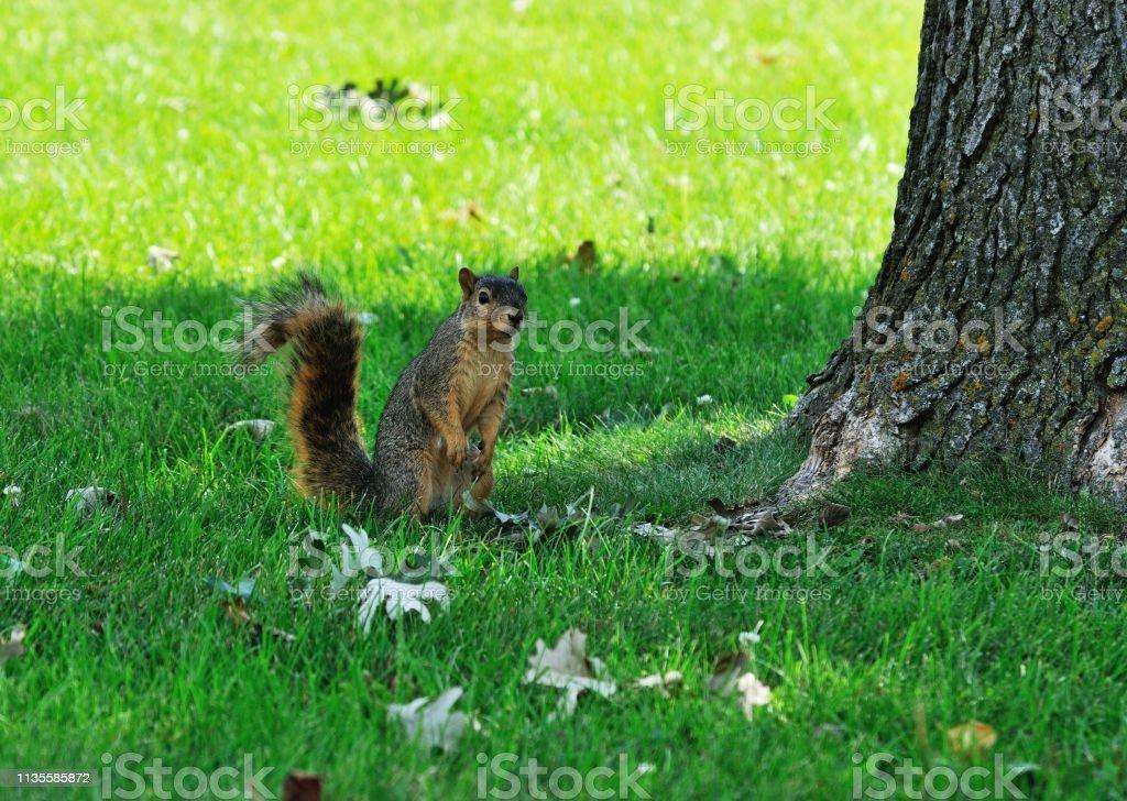 Eichhörnchen im Schatten – Foto