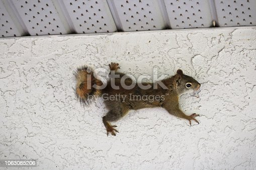 A squirrel of the side of a stucco wall.