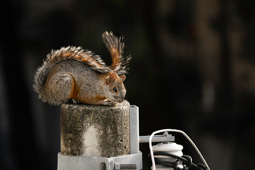 Squirrel on a lamp post