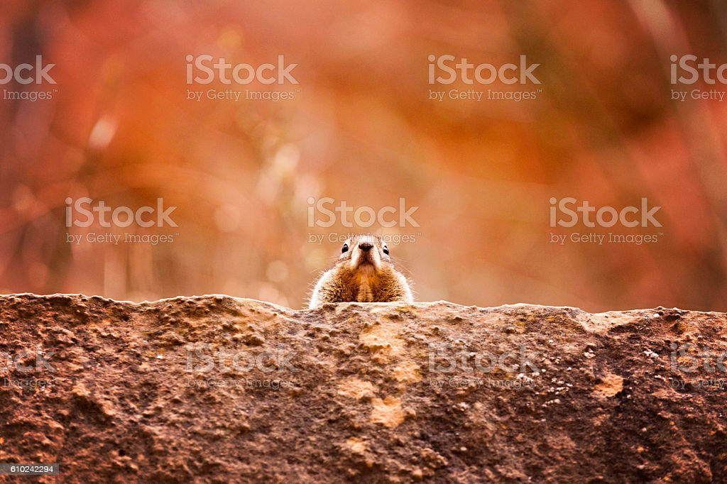 Squirrel on a Ledge stock photo