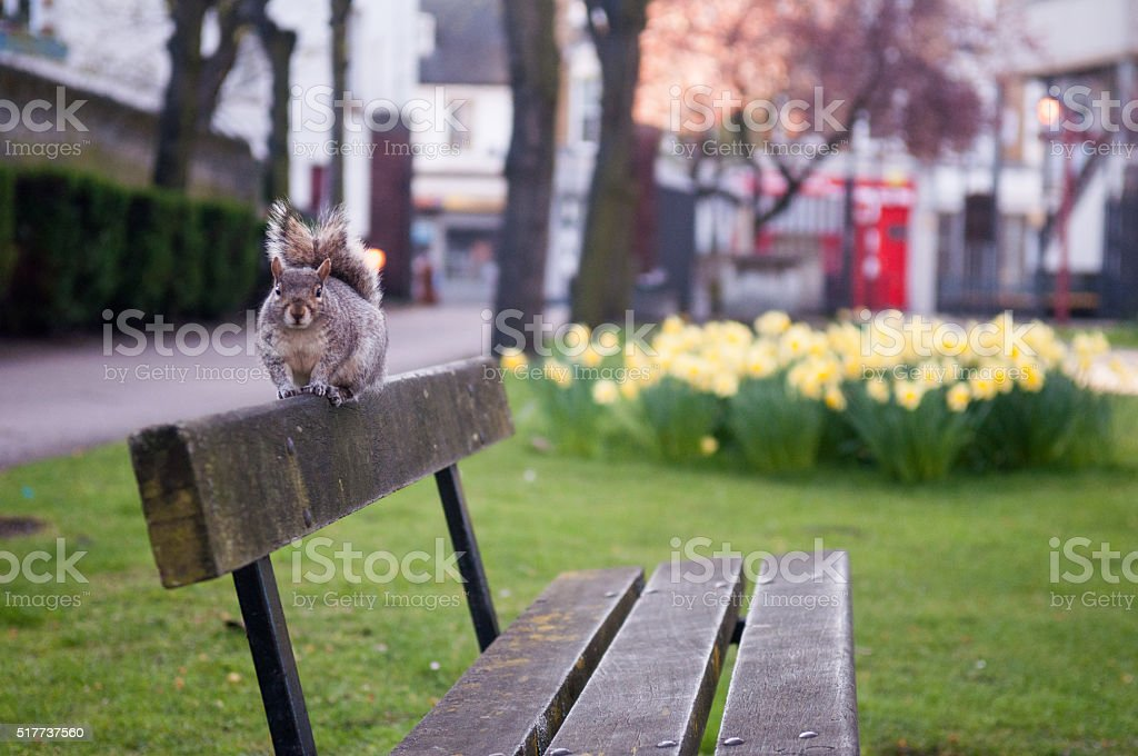 Squirrel on a park bench stock photo