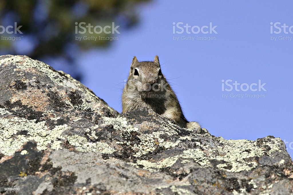 Squirrel On A Rock Against a Blue Sky stock photo