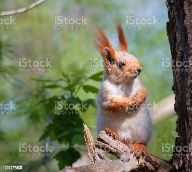 Photo of Squirrel on a tree branch. Wild animals in nature.