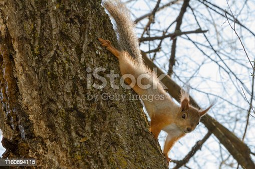squirrel on a tree with shallow foliage shows interest