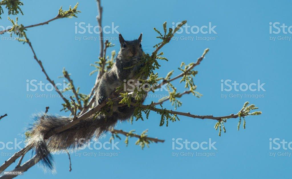 松鼠在樹上 免版稅 stock photo