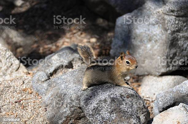 Photo of Squirrel on the rocks, California
