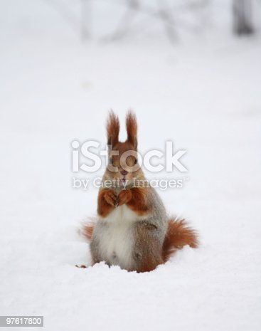Squirrel On The Snow Stock Photo & More Pictures of Animal