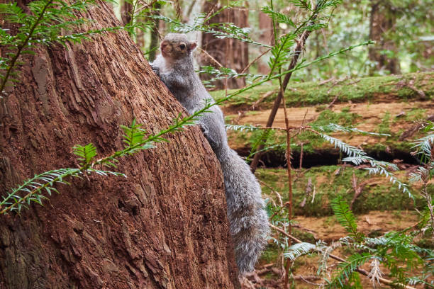 Squirrel on tree taking a break stock photo