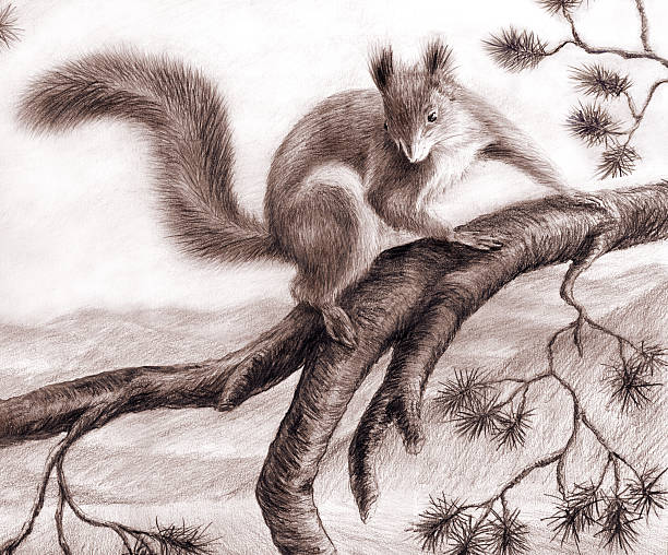squirrel - pencil drawing stock pictures, royalty-free photos & images