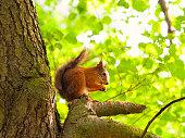 istock Squirrel 654949374