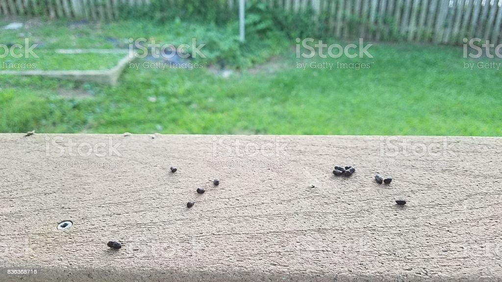 squirrel poop on a deck railing stock photo