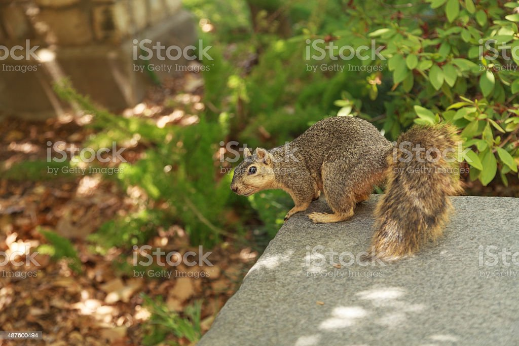 Squirrel rests on a bench in summer stock photo