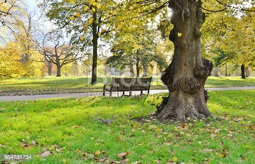 Old bench and a squirrel running on the lawn of a yellow coloured alley of the autumnal city park.