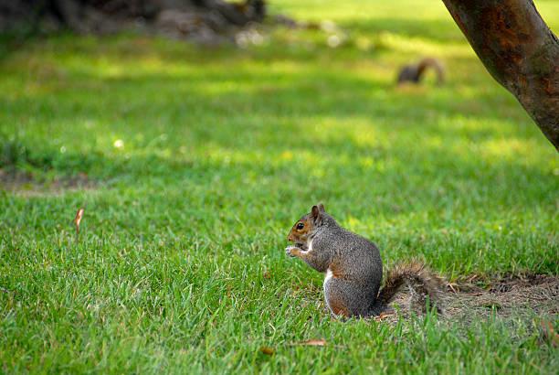 Squirrel Search stock photo