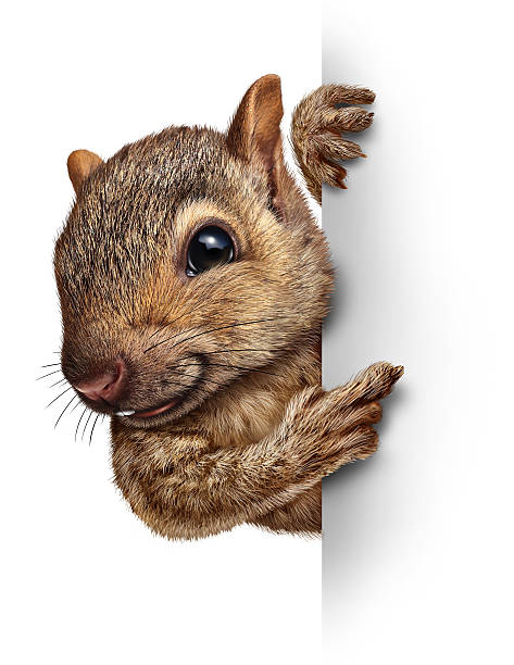 squirrel sign - squirrel stock photos and pictures