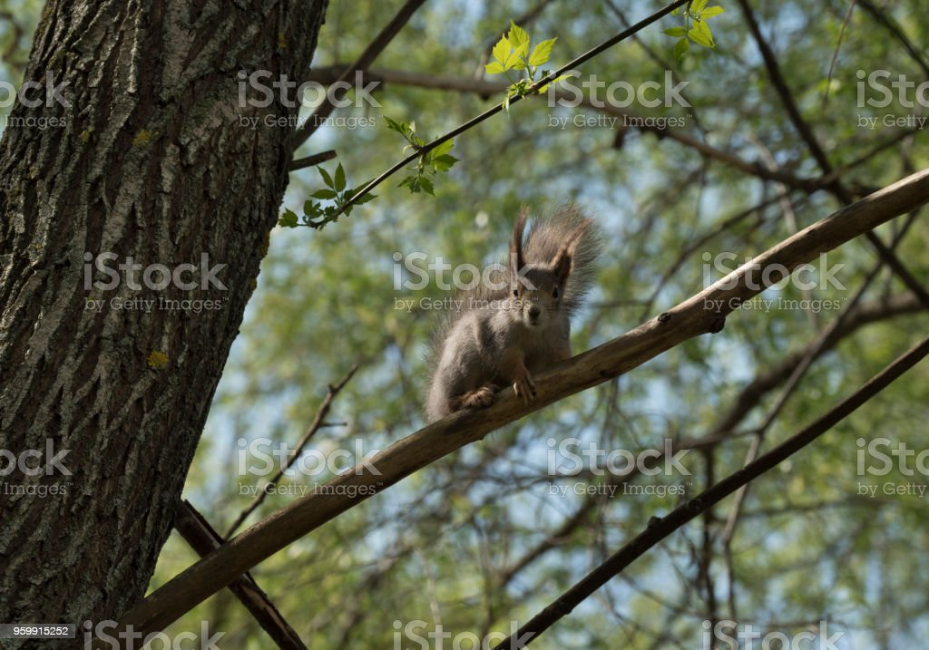 squirrel  sits on a tree branch stock photo