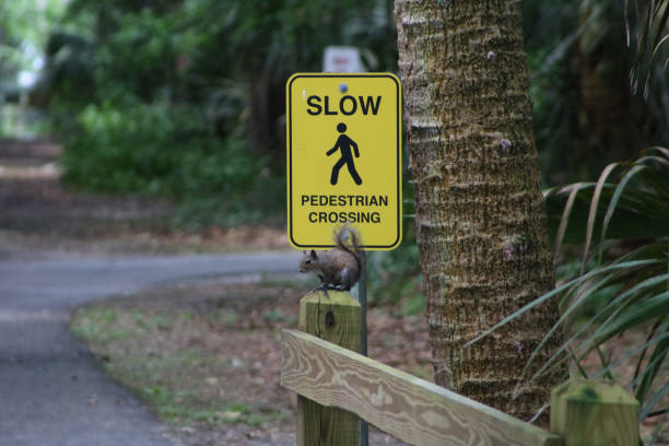 Squirrel sitting on fence post under pedestrian sign stock photo