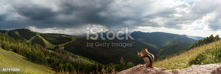 Squirrel eating flower on top of the mountain, looking at the view.