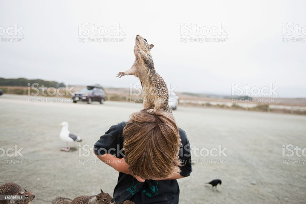Squirrel standing on a boy's head stock photo